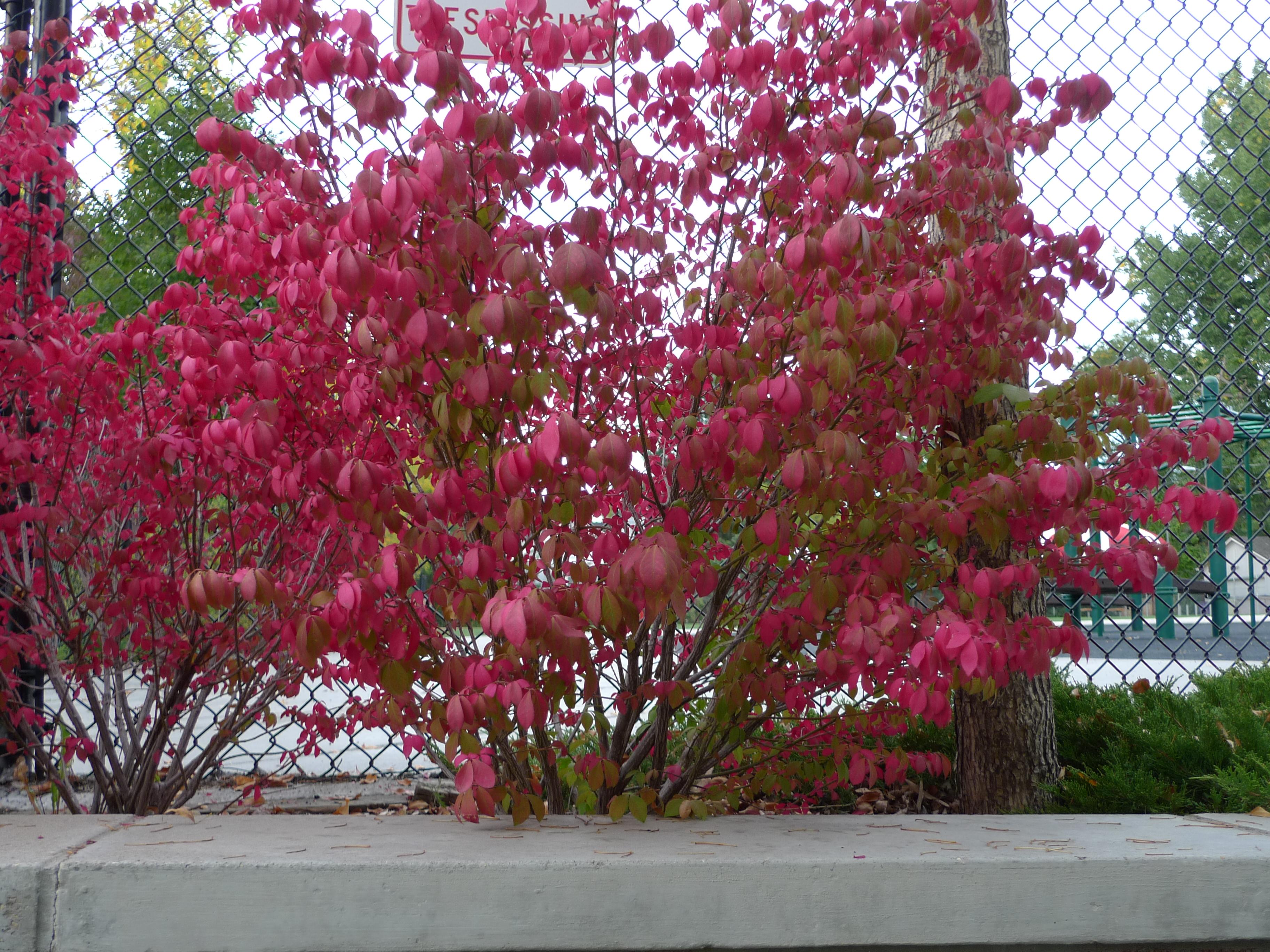 Colorful Plants Blossoms Amp Blueprints